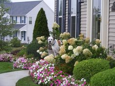 gardening ideas for front yard landscaping ideas for front yards diy front landscaping ideas front Landscaping Around Pool, Small Front Yard Landscaping, Front Yard Design, Home Landscaping, Landscaping Software, Hydrangea Landscaping, Natural Landscaping, Florida Landscaping, Landscape Plans