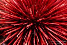 Image result for red photography