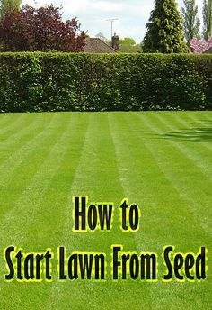 To start new lawns, many people wonder which is better: laying sod or sowing seeds. While laying sod is fast and produces high-quality new lawns, seeding lawns is cheaper and offers a wider variety of grass types. Grow Grass Fast, Growing Grass, Big Garden, Lawn And Garden, Garden Grass, Bermuda Grass Seed, Grow Banana Tree, How To Grow Bananas, Planting Grass