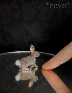 Miniature Cottontail Rabbit