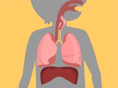 Lungs, an animated health resource page with lesson plans and teaching tips, for Kindergarten to 3rd graders, explains how the respiratory system helps you breathe oxygen and inhale and exhale air.