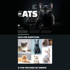 Cat Breeds Website Template is an elegant responsive theme designed with usability in mind. Pet Websites, Cat Online, Agriculture Logo, Pet Hotel, Web Design Software, Free Website Templates, Website Themes, Cat Sitting, Web Design Inspiration