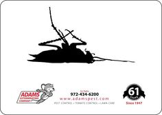 Prefer your pest to be like this? Give Adams' a call!!