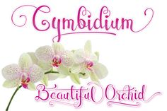 Cymbidium Script by BedRoom Studio on @creativemarket