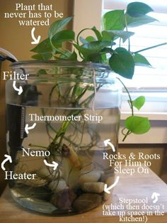 Houseplants That Filter the Air We Breathe The Fish Tank Above Is Made From A Glass Canister That Needed A Purpose Other Than Taking Up Space In The Recycling Bin. It's Made A Great Alternative To The Usual Dentist Office Type Aquariums. Navigate The Jump Betta Fish Tank, Betta Fish Bowl, Betta Aquarium, Plant Fish Tank, Glass Aquarium, Diy Aquarium, Aquarium Ideas, Fish Fish, Small Fish Tanks