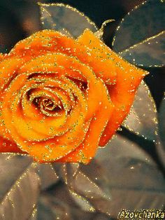 Роза. Gif Lindos, Love Rose, Smiley, Artworks, Roses, Night, Flowers, Plants, Painting