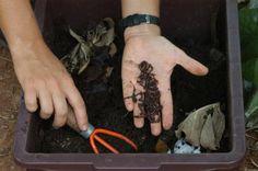 Saiba como fazer e usar uma composteira caseira