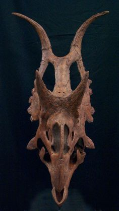 Diabloceratops head on. Image courtesy Jim Kirkland.