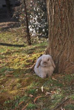 Bunny in the Springtime - February 8, 2011