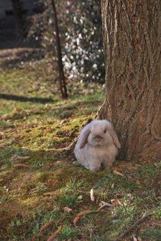 Bunny in the Springtime - February 8, 2011