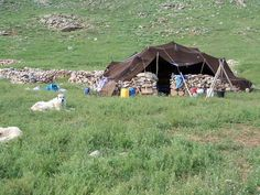 Anadolu da yayla kültürü Goats, Animals, Animaux, Animal, Animales, Goat, Animais
