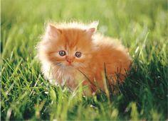 adorableeee!
