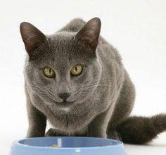 Five Homemade Cat Food Recipes