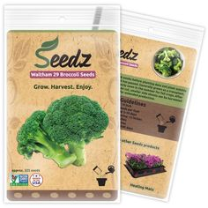 when to plant peas outside