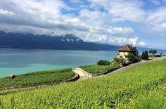 De matar de lindo! Vinhedos de Lavaux à beira do lago Genebra, em Lausanne, na Suíça