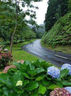 Portugal, And So The Adventure Begins, Hydrangea, Landscape Paintings, Stepping Stones, Golf Courses, Sidewalk, Country Roads, Exterior