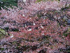 Kamakura, picture from the series Asian Spirit by Olivier Föllmi, LUMAS Artist ✓ Kamakura, Landscape Photography, Art Photography, Art For Sale Online, Art Online, World Press, Adventure Film, One With Nature, Asian