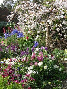 Shanghai, Poppies, Irises, and a Weeping Cherry tree=Springtime! Beautiful Flowers, Garden Inspiration, Beautiful Gardens, Weeping Cherry Tree, Pretty Gardens, Vertical Vegetable Garden, Garden Design, Cottage Garden, Hanging Garden