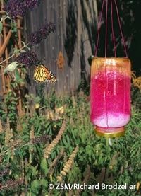 Attrayant Love This Simple And Pretty DIY Butterfly Feeder. Do It In Spring When They  Are In Need Of Nectar, Youu0027ll Probably Get Orioles Visiting As Well.