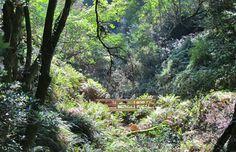 samuel p taylor national park west marin ca