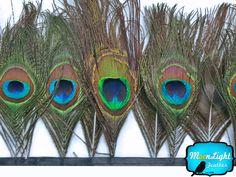 Peacock Tail Eye Trim