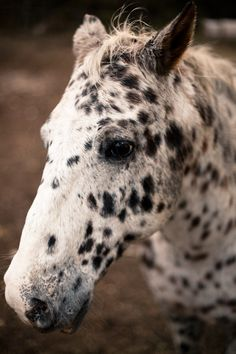 i love this sweet soft spotty pony face.