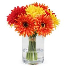 """Check out this item at One Kings Lane! 11"""" Gerber Daisies in Vase, Faux"""