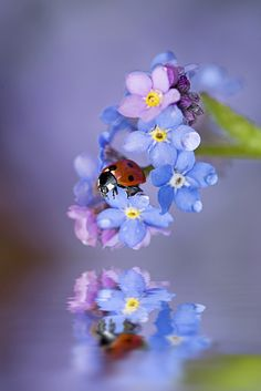 "mjime: ""untamedlens: "" Raindrop Lady by Jacky Parker Floral Art on Flickr. "" hermosos colores """