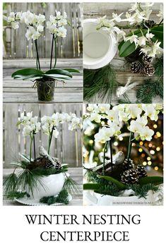 Winter Nesting Orchid Centerpiece | ©homeiswheretheboatis.net #flowers #DIY #winter