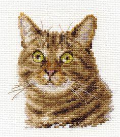 Suprised Cat