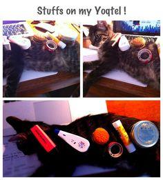 Stuffs on my Cat.