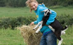 Kids are encouraged to help out with lambing, feeding and - of course - entertaining Farm Day, Dilly Dally, Family Days Out, Family Holiday, Lamb, Farm Family, Feather, Entertaining, Holidays