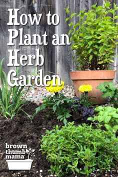 How to Plant an Herb Garden It's easy to plant an herb garden, either in containers or directly in the soil. You can grow a lot of herbs in a small space and enjoy their delicious, fresh flavors in all your favorite recipes. Herb Garden Design, Diy Herb Garden, Herbs Garden, Garden Ideas, Garden Bed, Easy Garden, Garden Projects, Backyard Ideas, Garden Tools