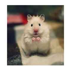 """Hamster"" by Milena Nurgaleeva, via 500px."