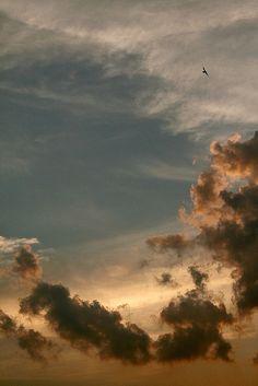 Blackbird, sunset in Curitiba, Brazil by Mathieu Struck, via Flickr