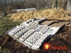 Cardboard and egg carton kill mulches Picnic Blanket, Outdoor Blanket, Eggs, My Favorite Things, Newspaper, Garden, Gardens, Flowers, Garten