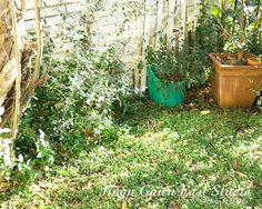 2014.12 庭 garden
