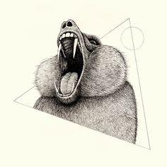 Alex G Griffiths Illustration Wildlifeanalysis III