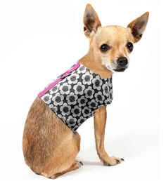 Pop Floral Charcoal Dog Harness // Aimee Wilder #pets