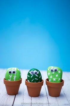 3 Pet Rock Cactus