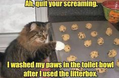 Ah, quit your screaming.  I washed my paws in the toilet bowl after I used the litterbox.