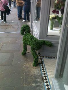 Meanwhile, outside the florist shop......