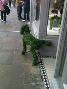 Love this doggy peeing up a shop doorway.
