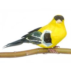 Finch-Feathered Wings-Yellow with Black/White-4 inch