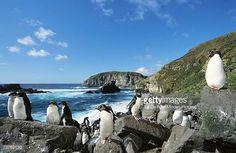 関連画像 Lion Book, Rockhopper Penguin, Penguins, Island, Water, Outdoor, Gripe Water, Outdoors, Penguin