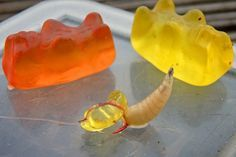Klasse Kombi: Made und Gummibärchen