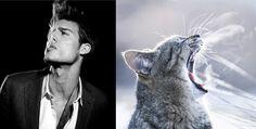 """? =^..^= ?  Série """"Des hommes versus des chatons"""",  """"Hot guys versus kittens""""."""