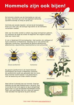 Bijenpaneel gemaakt in opdracht van de Gemeente Amstelveen #hommel Bugs, Bee Friendly, Nature Journal, All Nature, Bird Cards, Fauna, Science For Kids, Farm Life, Botany