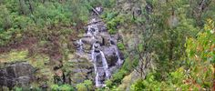 Summary This Masons Falls Circuitis a pleasant hike through the regenerating bush that clearly shows the impact of the Kinglake fires. There are large parts of the track that did seem to escape the tragic fires. Plus the Masons Falls are quite spectacular, and worth the visit. This version starts at Masons Falls Picnic Area. …