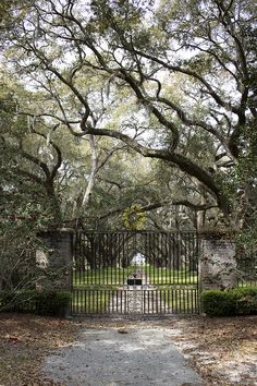 Southern escape dream house, private canopy driveway. Prospect Hill Plantation Hollywood, SC.